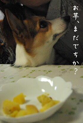 2010.2.16みかん家へ♪0036-1