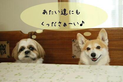 2010.2.16みかん家へ♪0031