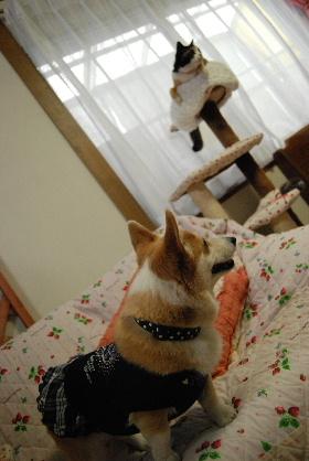 2010.2.16みかん家へ♪0045