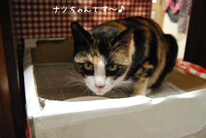 2010.2.16みかん家へ♪0041
