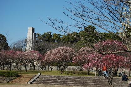 2010.2.20足立公園の梅♪0002