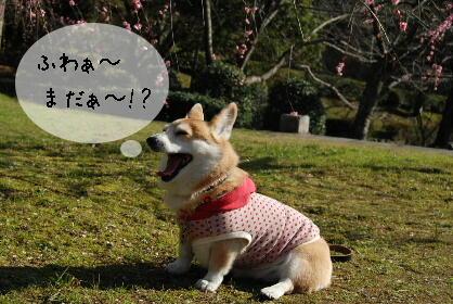 2010.2.20足立公園の梅♪0072