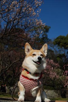 2010.2.20足立公園の梅♪0047