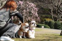 2010.2.24みんなで梅散歩♪0034