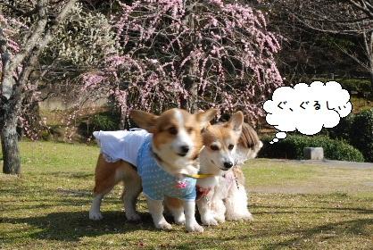 2010.2.24みんなで梅散歩♪0036
