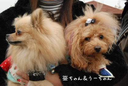 2010.3.7 大平楽OW♪0018
