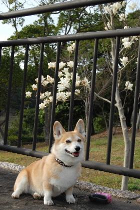 2010.3月 今日のお散歩♪0055