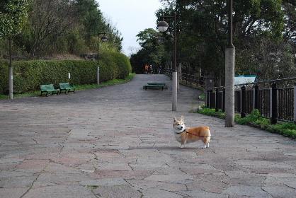 2010.3月 今日のお散歩♪0052