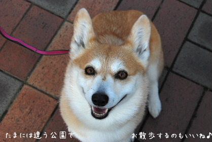 2010.3月 今日のお散歩♪0051-1