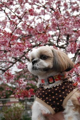 2010.3月 今日のお散歩♪0046