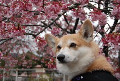2010.3月 今日のお散歩♪0045