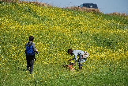 2010.3.22遠賀川の菜の花♪0013