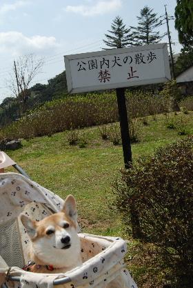 2010.3.27?28 ちゅりちゃんちへ♪0016