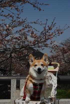 2010.3.27?28 ちゅりちゃんちへ♪0018