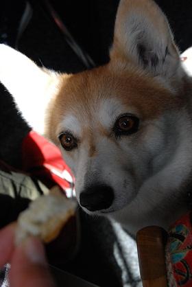 2010.4.7昭和池の桜♪0007