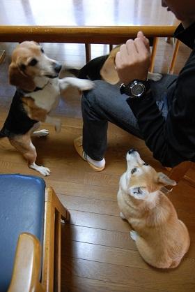 2010.4.25瓦そば&カモンワーフ0010