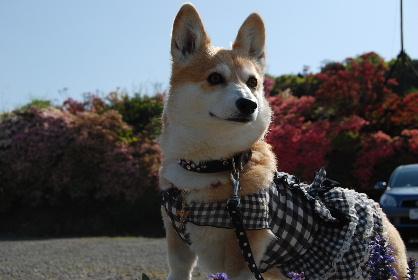 2010.4.29大村ツツジ&ドッグヒル0053