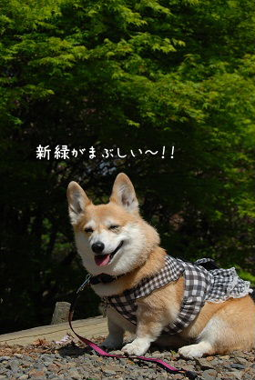 2010.4.29大村ツツジ&ドッグヒル0059