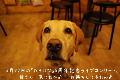 2010.5.1ちゅりちゃんお泊り♪0016