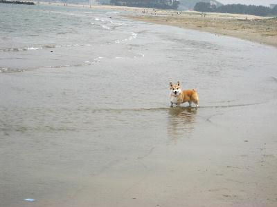 2010.5.5きりれもと海&たろはな0009