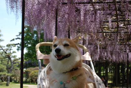 2010.5.7 常盤公園♪0039