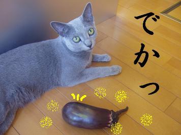 茄子とニャー