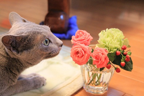 花とニャー
