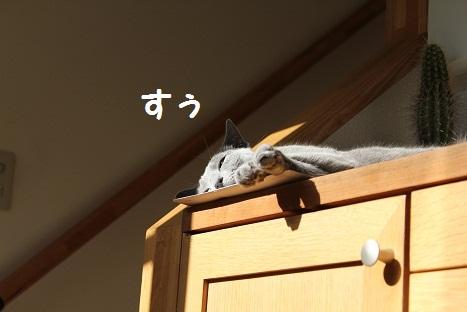 日向でお昼寝3