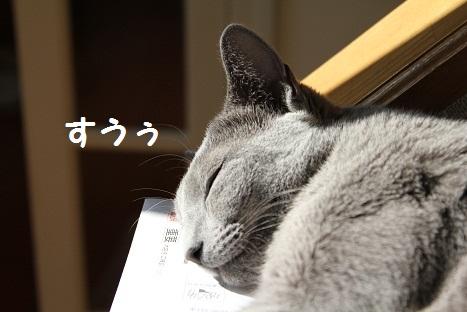 日向でお昼寝4