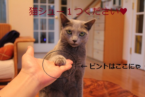 猫シューください