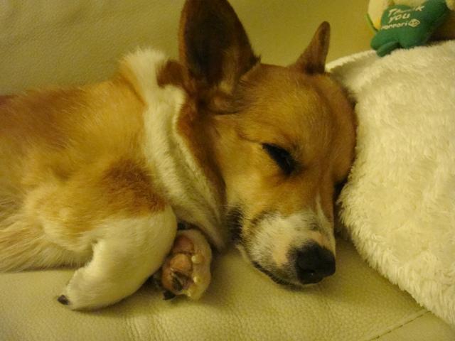 大好きなひめの寝顔