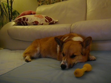 ひめちゃんが寝るには大きすぎる