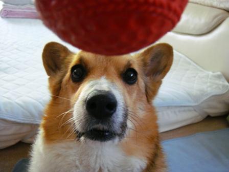 今日もボール遊びで