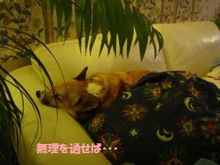 障害物の中で、無理やり寝がえりをする