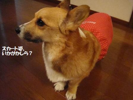 スカート、可愛いです!
