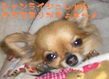 サンライズ様へ愛犬よりプレゼントのお礼の一言。