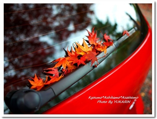2010-11-25-11.jpg