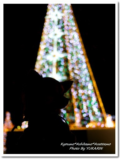 2010-11-29-01.jpg