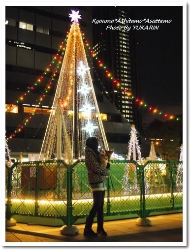2010-11-29-13.jpg
