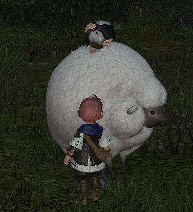 もふもふ羊