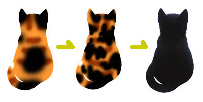 黒猫化計画3