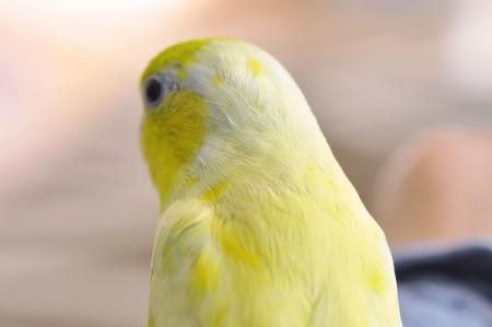 頭と背中に黄色の模様でし。