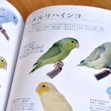 飼い鳥のお役立ち便利BOOK 2013~2014 中身