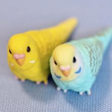 鳥カップル。