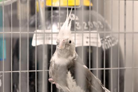 あず小鳥の診療所 ロックさん