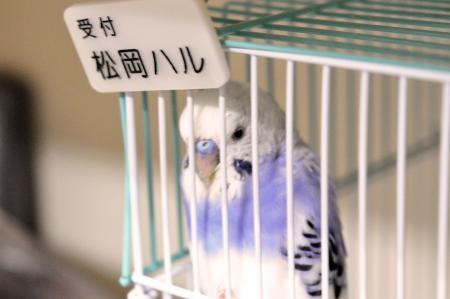 あず小鳥の診療所 看板娘