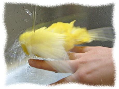 水浴びしてるチーちゃん