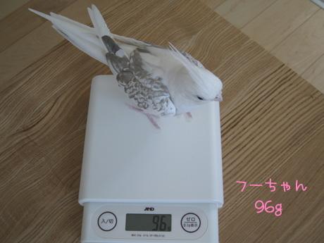 フーちゃん96g