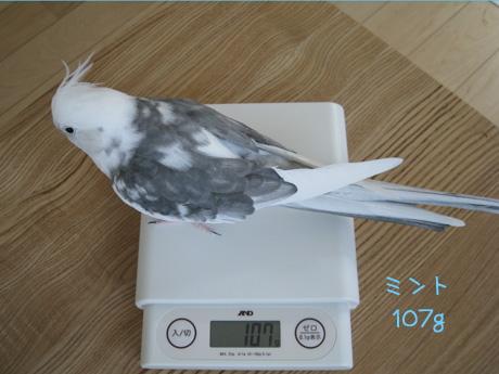 ミント107g