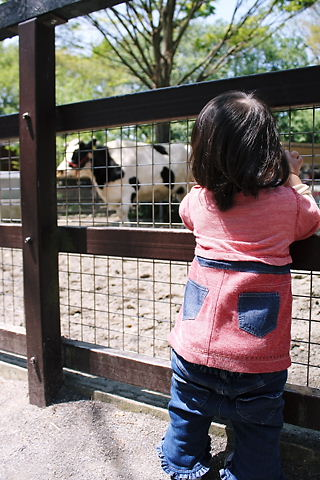 牛さんて大きいでちゅね